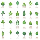 tree leafs and nature icons - vector icon set