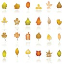 autumn leaf background and icons - vector icon set