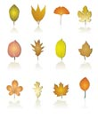 different kinds of tree leaf icons - vector icon set